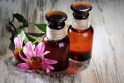 Эхинацея — инструкция по применению, лечебные свойства, противопоказания, отзывы