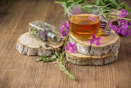 Иван чай — лечебные свойства, противопоказания, отзывы