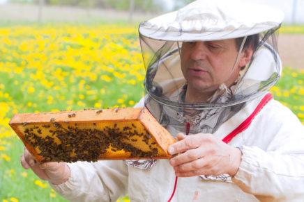 Что делать при укусе пчелы в домашних условиях