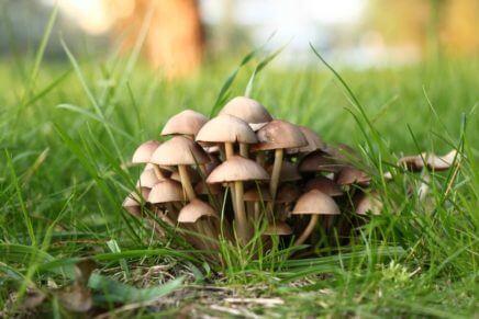 Отравление грибами — симптомы и признаки, первая помощь, лечение