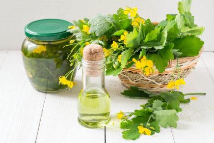 Чистотел — полезные свойства и противопоказания, народные рецепты